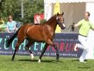 Sternenstaub  Foto: Pony-Royal
