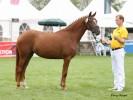 Ricky WE  v. Cockney Cracker Foto: Pony Royal